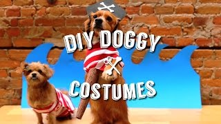 EASY DIY HALLOWEEN COSTUMES FOR YOUR PET (DOG)