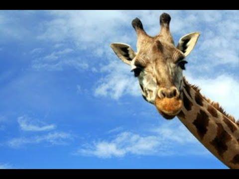 Самые смешные животные , КОТЫ СОБАКИ ЛУЧШИЕ ПРИКОЛЫ. ОЧЕВИДНОЕ И НЕВЕРОЯТНОЕ