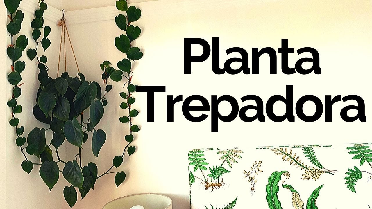 Decoración Con Plantas De Interior Planta Filodendro Youtube