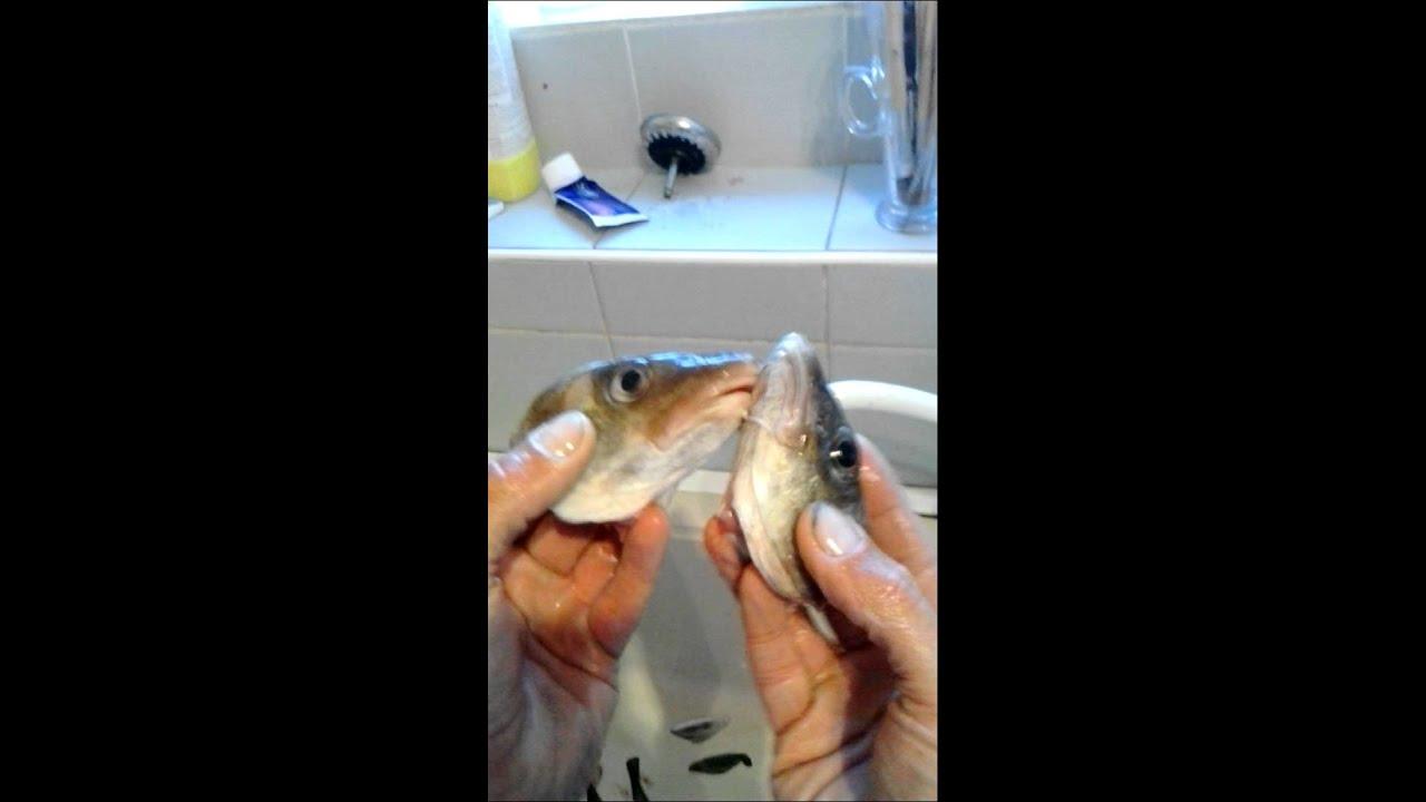 fish porn