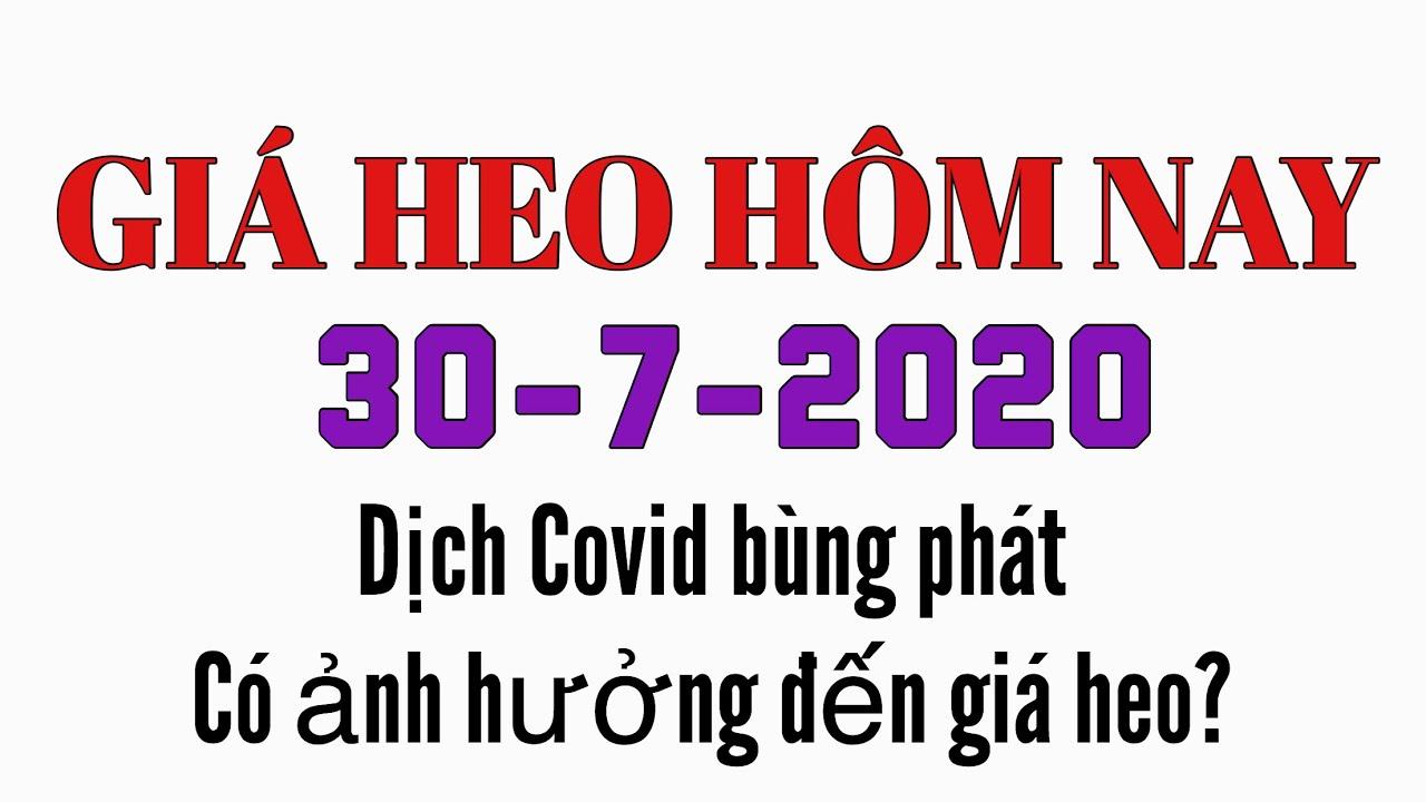Giá heo hơi hôm nay 30/7/2020 || Dịch Covid trở lại, có ảnh hưởng đến giá heo?