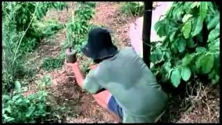 SỐNG TRONG SỢ HÃI (2005)