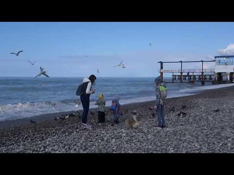 Шум моря и крик чаек (без слов). Пляж \
