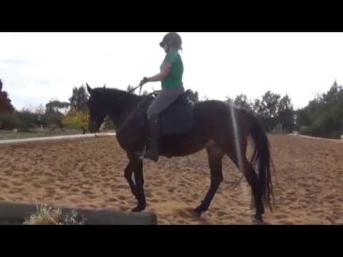 Retraining The Standardbred - Teaching Trot Instead Of Pace - Indi