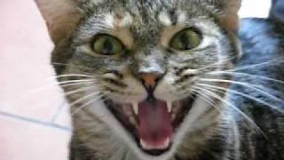 Говорящая кошка.   Cat that can talk(, 2009-07-28T18:22:48.000Z)