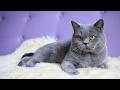 Кот Играет с Тряпкой [ПРИКОЛ] #2