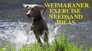 Weimaraner Exercise [Needs and Ideas]
