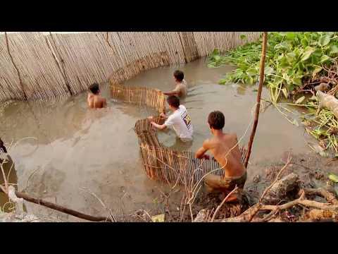 """Indonesia. """"Arroz y peces o aceite de palma"""""""