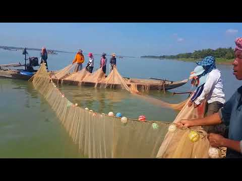 Ikan sungai mekong : menakjubkan