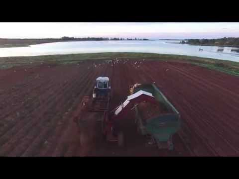 PEI Early Potato Farming September 2015