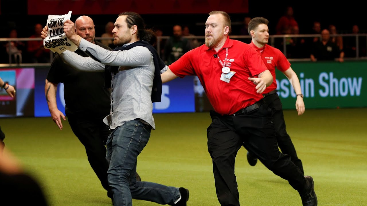 Crufts final invaded by Peta animal rights protesters