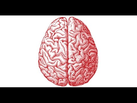 The Teenager's Mind - Science Cafe