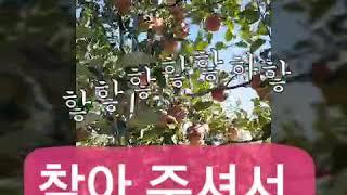 경북 영주 풍기에서 안심명품사과를 재배하고 있는 남향농…