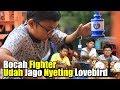 Kicau Mania Cilik Udah Jago Nyetting Lovebird Konslet  Mp3 - Mp4 Download
