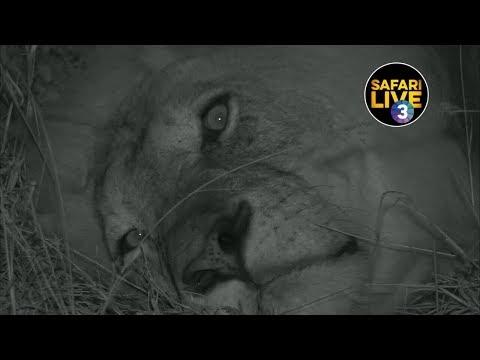 safariLIVE on SABC 3 S2 - Episode 6