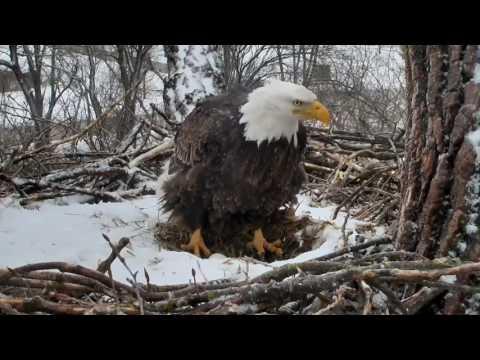 Decorah Eagles,Mom Calls For Shift Change,Dad In&Decorah Shimmy 2/24/17