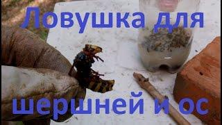 видео Ловушка шершней и  ос