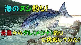 三重県大紀町錦漁港でふかせ釣り(フカセ釣り)!海のヌシ釣り!グレ(メジナ)釣りに挑戦!