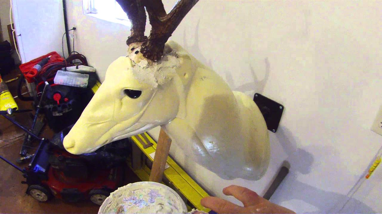 White tail deer taxidermy how to attach the antlers
