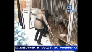 Отловом бездомных животных займется «Велес»