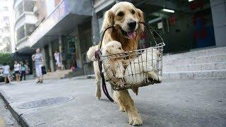 Tiktok Dog Cat 4 - 犬が猫のいたずらに耐えるとき、素敵な犬 | Dog Cat TV