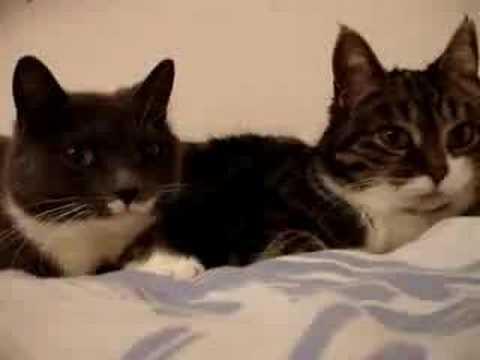 Говорящие коты ютубе