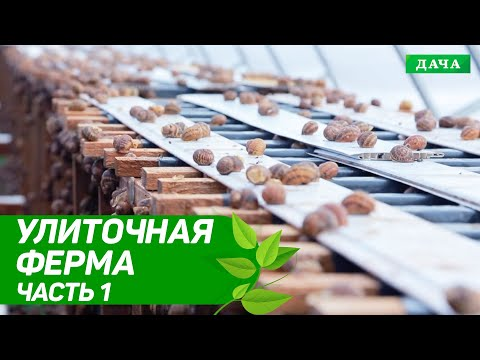 Удачный бизнес: Улиточная ферма в Украине | Разведение и выращивание улиток | Бизнес идеи