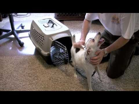 Small Dog - Kennel Training