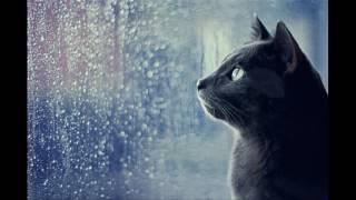 [Guitar hòa tấu] Bâng khuâng chiều nội trú - Mèo Ú