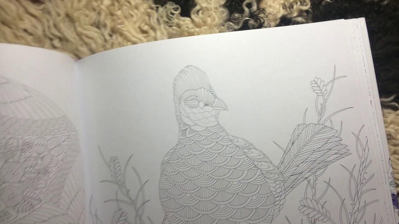 Обзор раскраски «Чудеса Природы» от Милли Маротта - YouTube