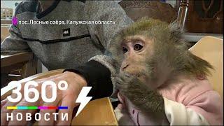 Супруги из Калужской области приютили шесть обезьянок
