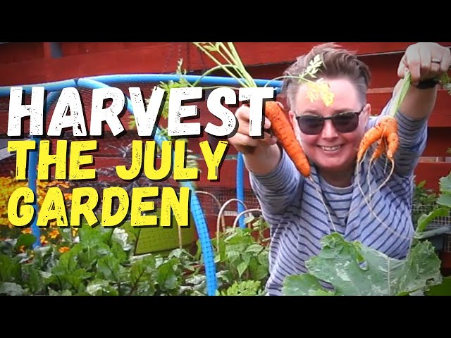 July harvest in my Scottish garden