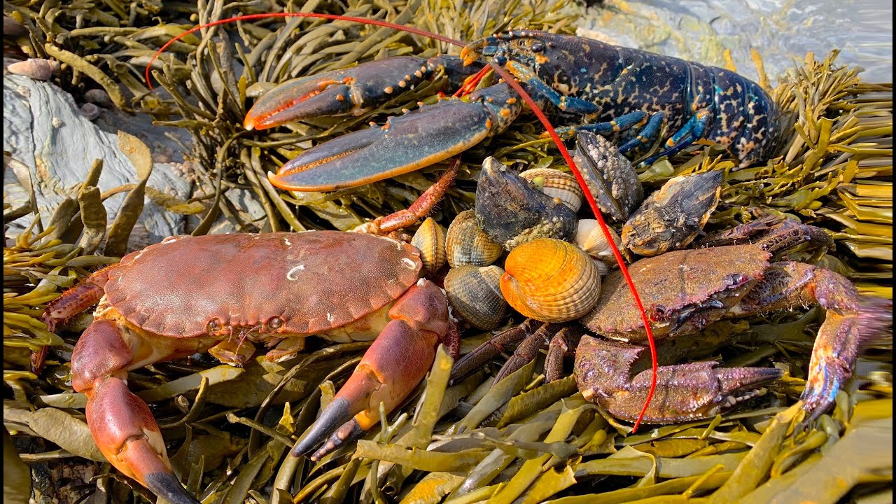 Coastal Foraging - Lobster, Cockles, Clam and Crab Beach Cook Up