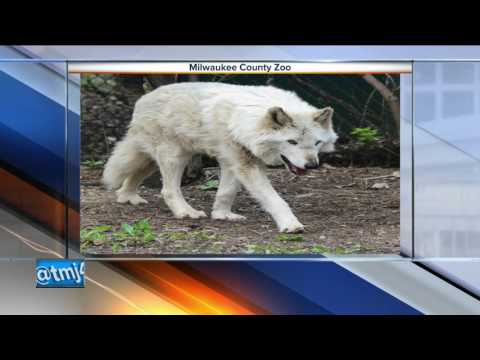 Wolf dies at Milwaukee County Zoo