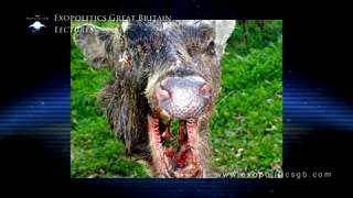 Bizarre UK Animal Mutilations Continue by David Cayton