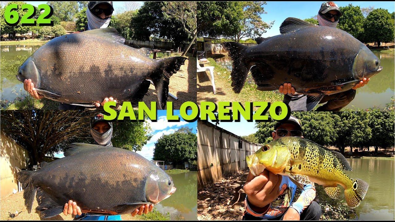 Muita diversão no pequeno lago do Pesque Pague San Lorenzo - Fishingtur 622 pesca