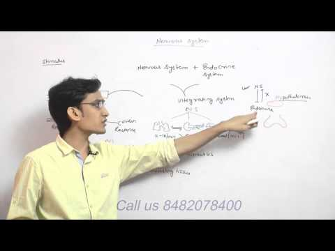 nervous system demo video lecture for AIPMT,BJEE,BHU,AFMC,AIIMS
