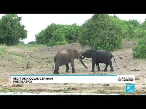 L'interdiction de chasser l'éléphant levée au Botswana
