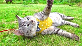 ドッグランを綺麗に整備して猫達を解き放ってみると。。