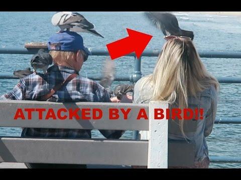 BIRDS ATTACKING GIRL ON THE SANTA MONICA PIER!