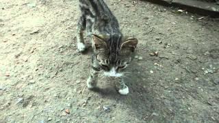 Котёнок с травмой очень нуждается в доме!