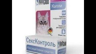 Таблетки для кошек_Какие кошки лучше