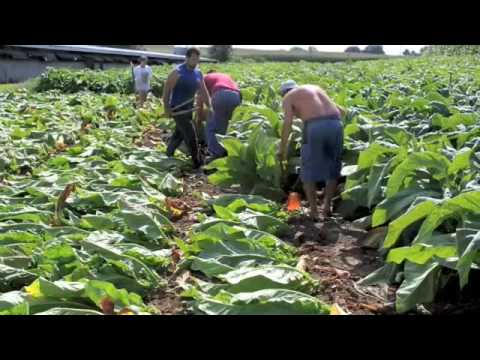 Lancaster County Tobacco Story 09
