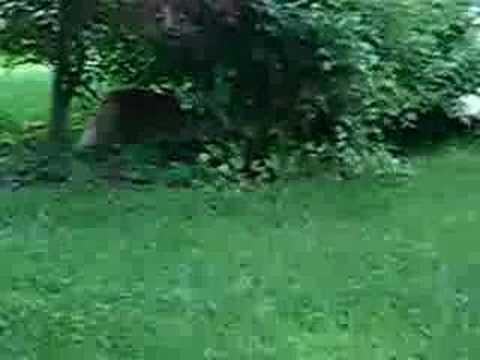Catfight Youtube