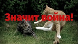 Кот завис на тропе войны!