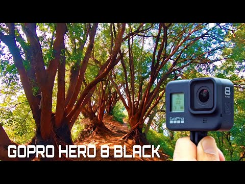 Gopro Hero 8 Black Review   Red Forest Footage