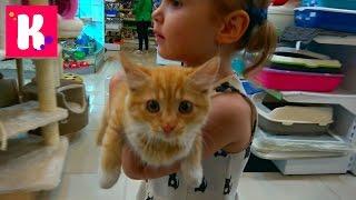 Download VLOG Кошечка Мурка с Катей в салоне красоты, грюминг, подарки от магазина для животных Mp3 and Videos