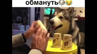 Эту собаку не обмануть