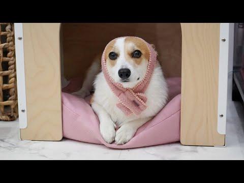 혼냈더니 능청맞게 모르는척하는 강아지 | Sly puppy who puts up an innocent face while being scolded