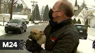 В США щенок сорвал прямой эфир ведущему прогноза погоды - Москва 24